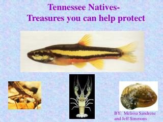 Tennessee Natives-   Treasures you can help protect