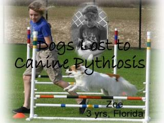 Canine Pythiosis