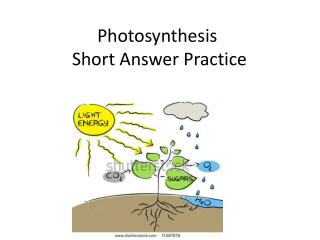 Photosynthesis  Short Answer Practice