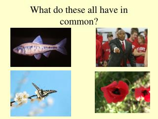 What do these all have in common?