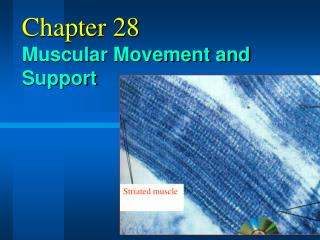 Chapter 28 Muscular Movement and Support