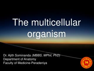 The multicellular organism