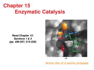 Chapter 15        Enzymatic Catalysis