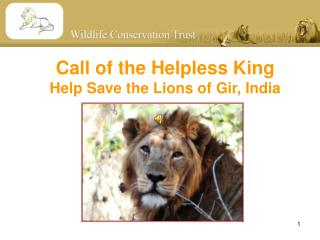 Call of the Helpless King Help Save the Lions of Gir, India