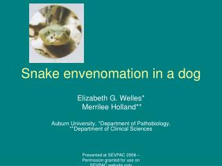 Snake envenomation in a dog