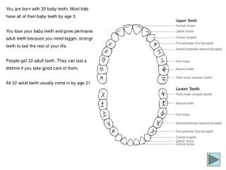 You are born with 20 baby teeth. Most kids have all of their baby teeth by age 3.