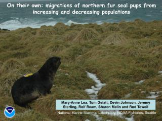 On their own: migrations of northern fur seal pups from increasing and decreasing populations