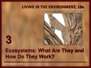 Ecosystems: What Are They and How Do They Work?