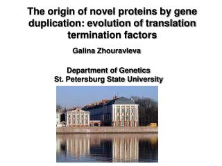 The origin of novel proteins by gene duplication: evolution of translation termination factors