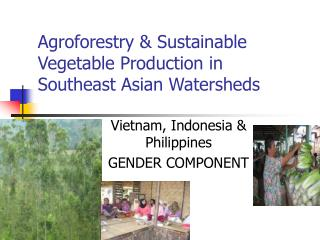 Agroforestry & Sustainable Vegetable Production in Southeast Asian Watersheds