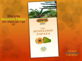 What is the  Sensation Papaya  and where can I get it?