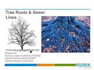 Tree Roots & Sewer Lines