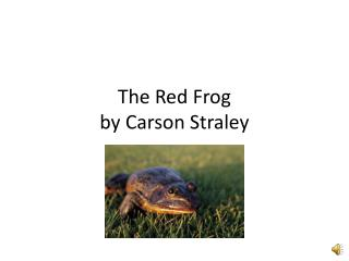 The Red Frog by Carson  Straley