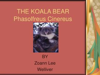 THE KOALA BEAR    Phasolfreus Cinereus