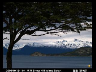 2006/10/19-11/4   南極  Snow Hill Island Safari 攝影  陳美月
