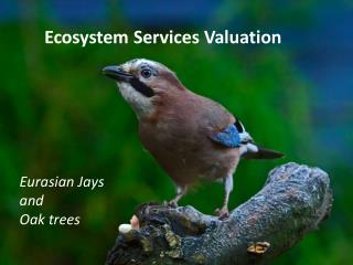 Ecosystem Services Valuation