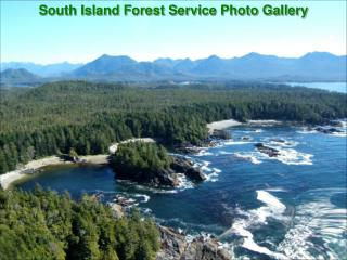 South Island Forest Service Photo Gallery