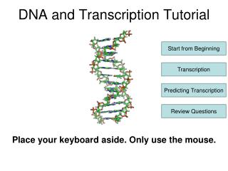 DNA and Transcription Tutorial