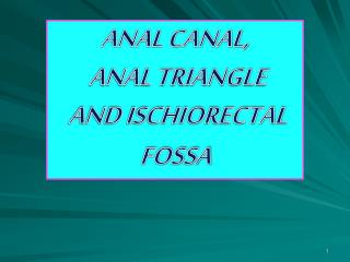 ANAL CANAL,  ANAL TRIANGLE  AND ISCHIORECTAL FOSSA