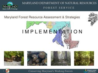 Implementing State Forest Strategy--Jack Perdue