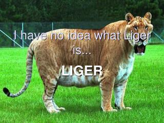 I have no idea what Liger is...