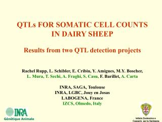 QTLs FOR SOMATIC CELL COUNTS  IN DAIRY SHEEP Results from two QTL detection projects