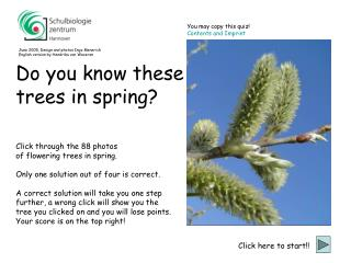 Click through the 88 photos  of flowering trees in spring.
