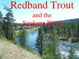 Redband  Trout and the  Spokane River