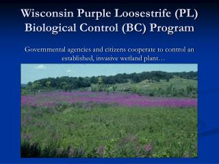Wisconsin Purple Loosestrife (PL) Biological Control (BC) Program