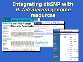 Integrating dbSNP with  P. falciparum  genome resources