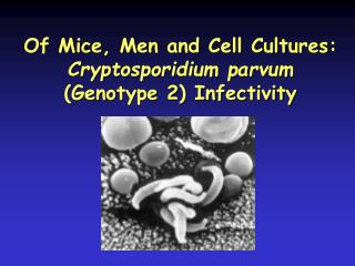 Of Mice, Men and Cell Cultures:  Cryptosporidium parvum  (Genotype 2) Infectivity