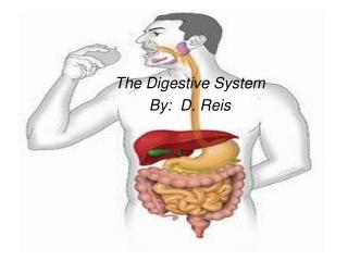The Digestive System By:  D. Reis