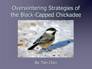 Overwintering Strategies of the Black-Capped Chickadee