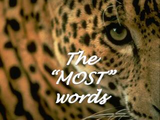 "The ""MOST"" words"