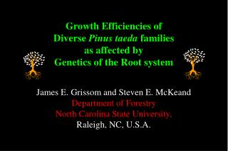 Growth Efficiencies of Diverse  Pinus taeda  families as affected by Genetics of the Root system