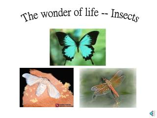 The wonder of life -- Insects