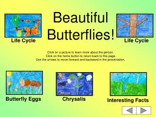 Beautiful Butterflies!