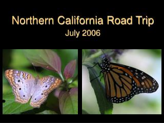Northern California Road Trip July 2006