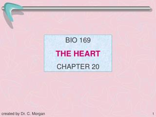 BIO 169 THE HEART CHAPTER 20