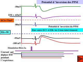 Potentiel d 'inversion des PPSI