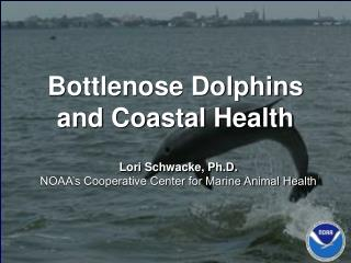Bottlenose Dolphins and Coastal Health