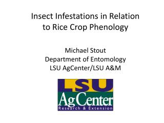 Insect Infestations in Relation to Rice Crop Phenology