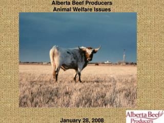 Alberta Beef Producers  Animal Welfare Issues