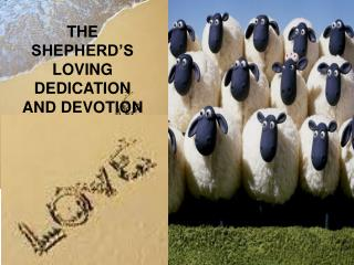 THE SHEPHERD'S LOVING DEDICATION AND DEVOTION Rev. Dr. Samuel P. Fernandez PREACHER