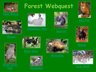 Forest Webquest
