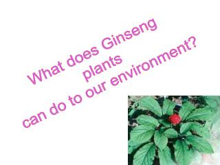 What does Ginseng  plants can do to our environment?