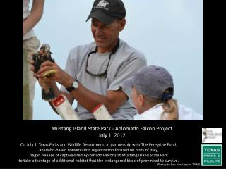 Mustang Island State Park -  Aplomado  Falcon Project July 1, 2012