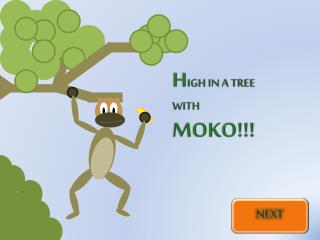 H IGH IN A TREE WITH MOKO!!!