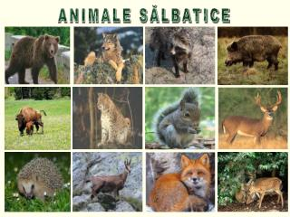 ANIMALE SĂLBATICE