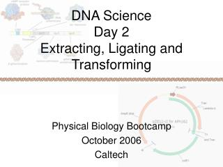 DNA Science Day 2 Extracting, Ligating and Transforming